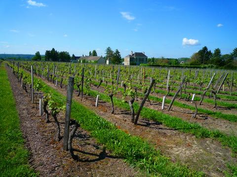 vignoble Bourgueil